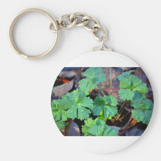 Sprouts Basic Round Button Keychain
