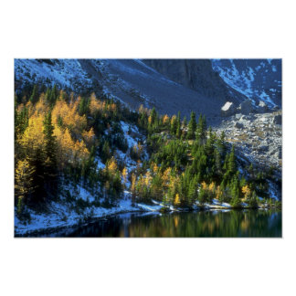 Spruce and Tamarack Forest, Alberta Poster