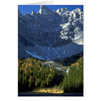 Spruce and tamarack forest below Tombstone Mountai Greeting Card