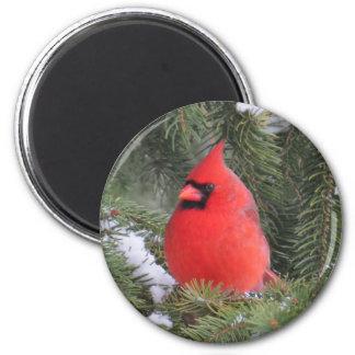Spruce cardinal magnet