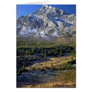 Spruce Forest and Mount Rae, Alberta, Canada Greeting Card