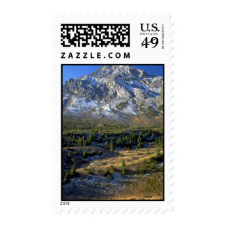 Spruce Forest and Mount Rae, Alberta, Canada Stamps