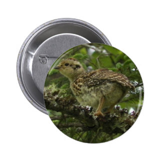 Spruce Grouse Chick Pinback Button
