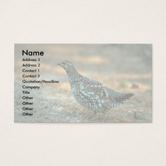Spruce Grouse-hen Business Card