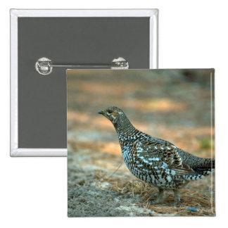 Spruce Grouse-hen Pinback Button