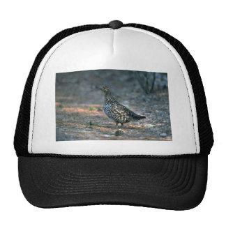Spruce grouse, hen trucker hat