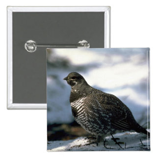 Spruce grouse, male button