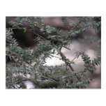 Spruce Tree Abstract Post Cards