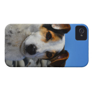 Spud The Dog iPhone 4 Covers