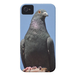 Spud the pigeon Case-Mate iPhone 4 case