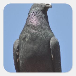 Spud the pigeon square sticker