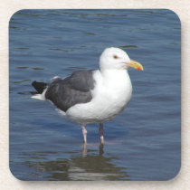 Spunky Wading Seagull Coaster