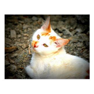 Spy Kitty Postcard