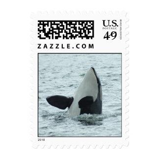 Spyhop Stamp