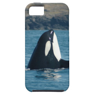 Spyhopping Orca iPhone Case iPhone 5 Cases