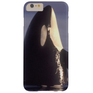 Spyhopping Orca Killer Whale (Orca orcinus) near Barely There iPhone 6 Plus Case