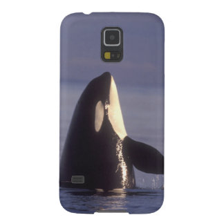 Spyhopping Orca Killer Whale (Orca orcinus) near Case For Galaxy S5
