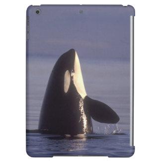 Spyhopping Orca Killer Whale (Orca orcinus) near Case For iPad Air