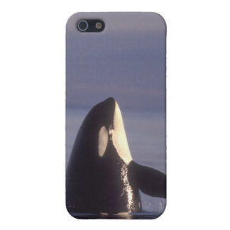 Spyhopping Orca Killer Whale (Orca orcinus) near Case For iPhone SE/5/5s