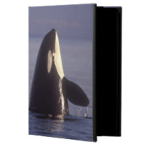 Spyhopping Orca Killer Whale (Orca orcinus) near Cover For iPad Air