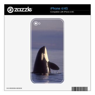 Spyhopping Orca Killer Whale (Orca orcinus) near Decals For iPhone 4