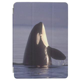 Spyhopping Orca Killer Whale (Orca orcinus) near iPad Air Cover