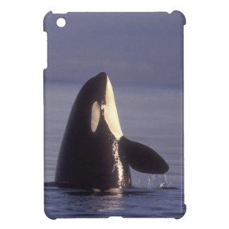 Spyhopping Orca Killer Whale (Orca orcinus) near iPad Mini Cases