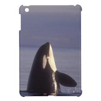 Spyhopping Orca Killer Whale (Orca orcinus) near iPad Mini Cover