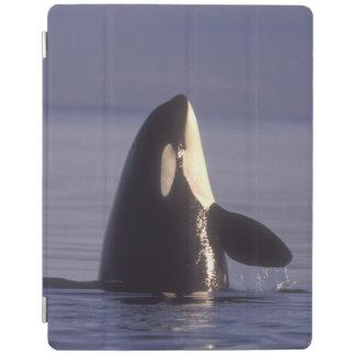 Spyhopping Orca Killer Whale (Orca orcinus) near iPad Smart Cover