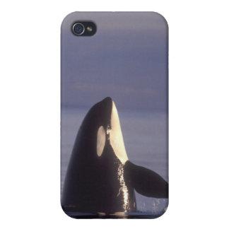 Spyhopping Orca Killer Whale (Orca orcinus) near iPhone 4/4S Case