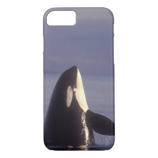 Spyhopping Orca Killer Whale (Orca orcinus) near iPhone 8/7 Case