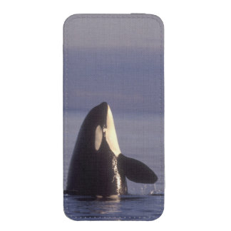 Spyhopping Orca Killer Whale (Orca orcinus) near iPhone SE/5/5s/5c Pouch