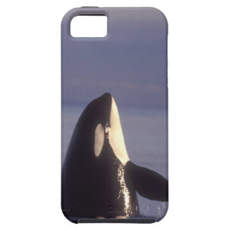 Spyhopping Orca Killer Whale (Orca orcinus) near iPhone SE/5/5s Case