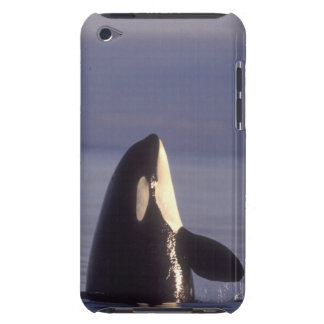 Spyhopping Orca Killer Whale (Orca orcinus) near iPod Case-Mate Case