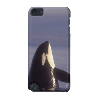Spyhopping Orca Killer Whale (Orca orcinus) near iPod Touch 5G Cover