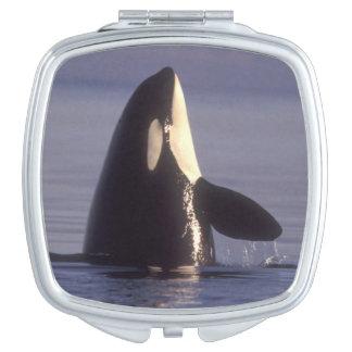 Spyhopping Orca Killer Whale (Orca orcinus) near Vanity Mirror