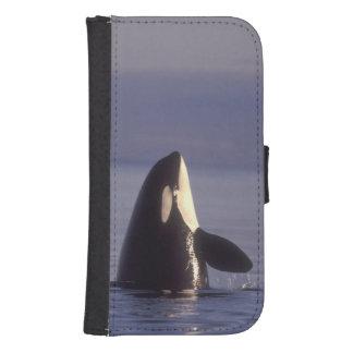 Spyhopping Orca Killer Whale (Orca orcinus) near Phone Wallet