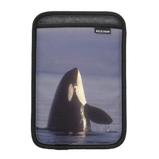 Spyhopping Orca Killer Whale (Orca orcinus) near Sleeve For iPad Mini