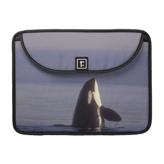 Spyhopping Orca Killer Whale (Orca orcinus) near Sleeve For MacBook Pro