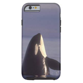 Spyhopping Orca Killer Whale (Orca orcinus) near Tough iPhone 6 Case