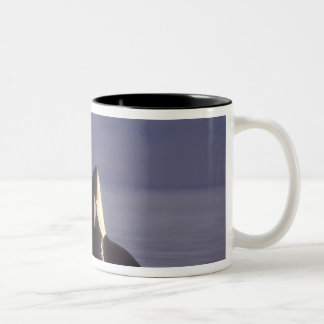 Spyhopping Orca Killer Whale (Orca orcinus) near Two-Tone Coffee Mug