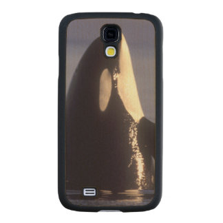 Spyhopping Orca Killer Whale (Orca orcinus) near Carved® Maple Galaxy S4 Case