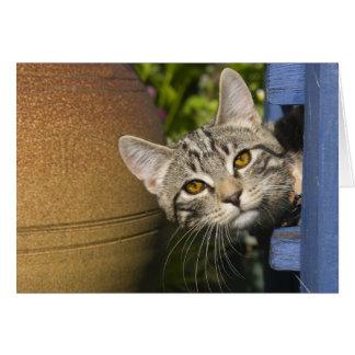 spying kitten card