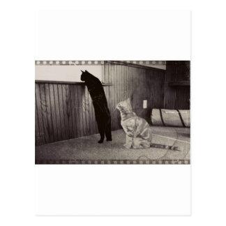 spying kitties postcard