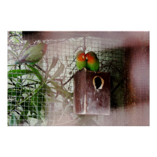 Spying Lovebird Print