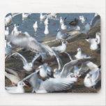 squabbling seagulls mouse mat