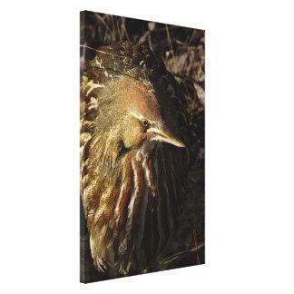 Squacco Heron Bird Wildlife Animal Refuge Canvas Print