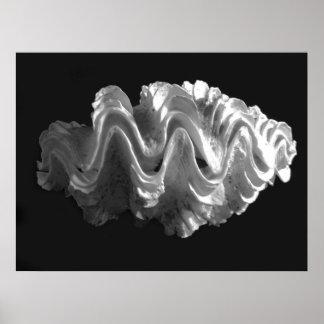 Squamosa Frilled gigante del Tridacna del Seashell Póster