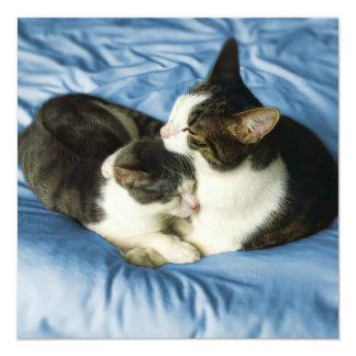 Square Card - Cute cats cuddling