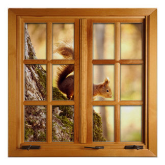Square Faux Window Illusion - Squirrel Poster